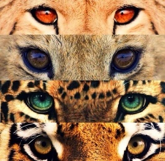 Animalier Eyes